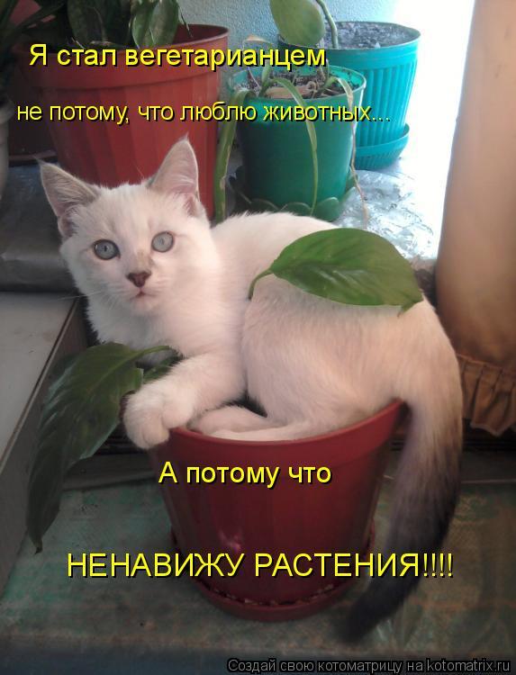 Котоматрица: Я стал вегетарианцем не потому, что люблю животных... А потому что НЕНАВИЖУ РАСТЕНИЯ!!!!