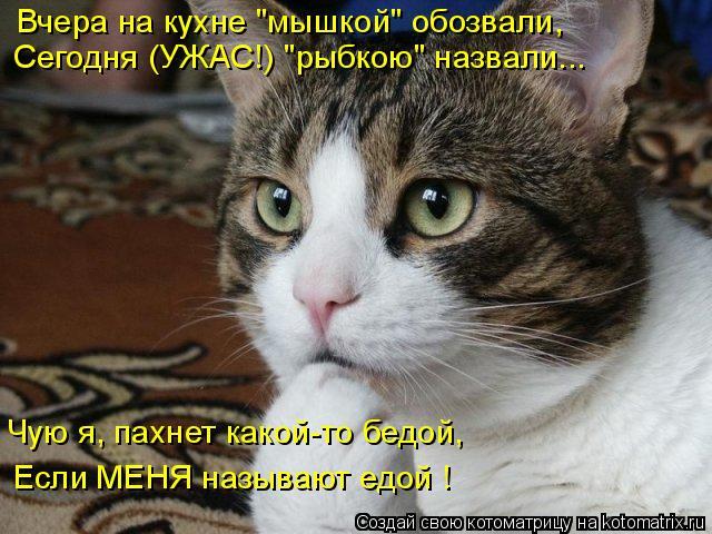 """Котоматрица: Вчера на кухне """"мышкой"""" обозвали, Сегодня (УЖАС!) """"рыбкою"""" назвали... Чую я, пахнет какой-то бедой, Если МЕНЯ называют едой !"""