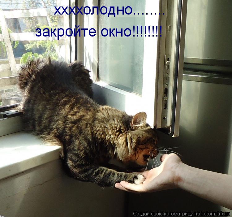 Котоматрица: ххххолодно........ закройте окно!!!!!!!!