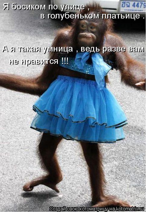 Котоматрица: Я босиком по улице , в голубеньком платьице . А я такая умница , ведь разве вам не нравится !!!