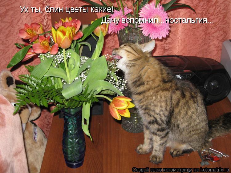 Котоматрица: Ух ты, блин цветы какие! Дачу вспомнил...ностальгия...