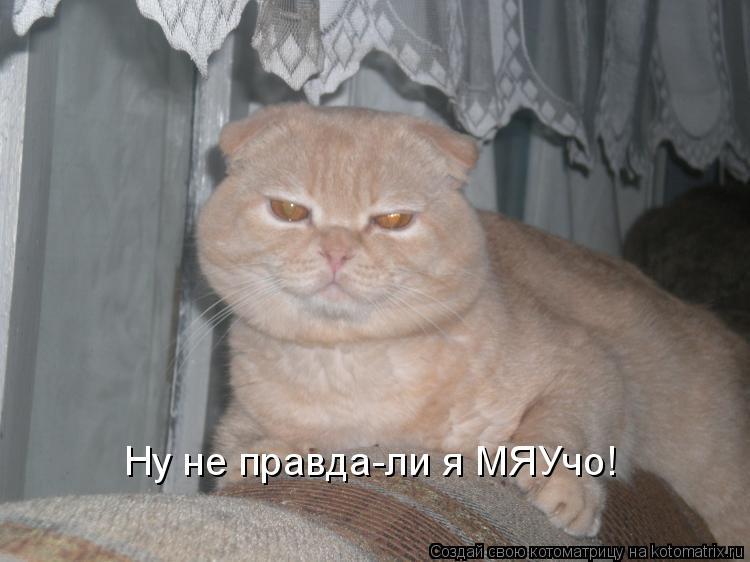Котоматрица: Ну не правда-ли я МЯУчо!