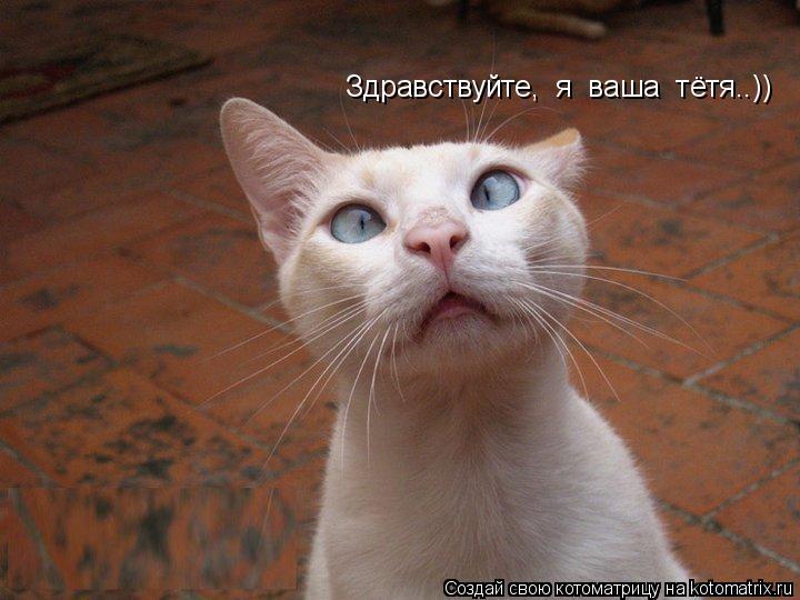 Котоматрица: Здравствуйте,  я  ваша  тётя..))