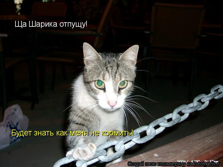 Котоматрица: Ща Шарика отпущу! Ща Шарика отпущу! Будет знать как меня не кормить!