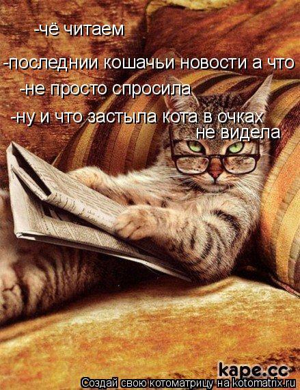 Котоматрица: -чё читаем -последнии кошачьи новости а что -не просто спросила  -ну и что застыла кота в очках не видела