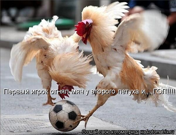 Котоматрица: Первый игрок отнял мяч у второго петуха и,,,,ГОЛ!!!!!!!!