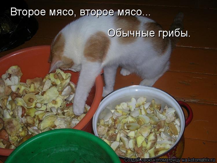 Котоматрица: Второе мясо, второе мясо...  Обычные грибы.