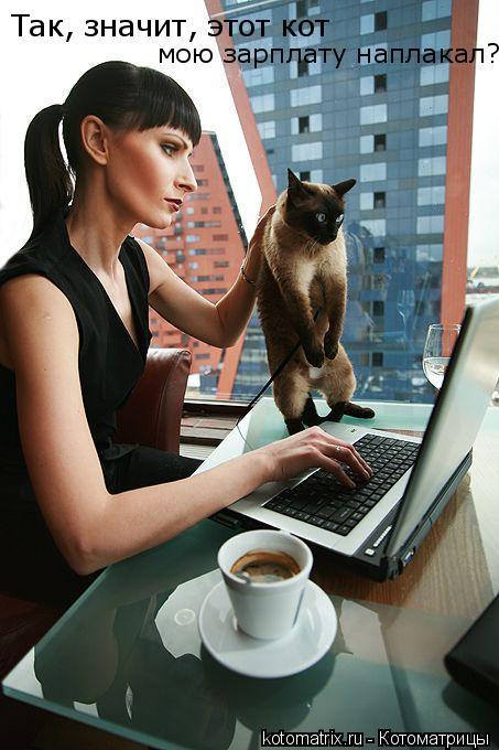 Котоматрица: Так, значит, этот кот  мою зарплату наплакал?
