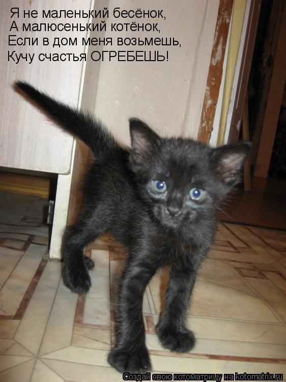 Котоматрица: А малюсенький котёнок, Если в дом меня возьмешь, Кучу счастья ОГРЕБЕШЬ! Я не маленький бесёнок,
