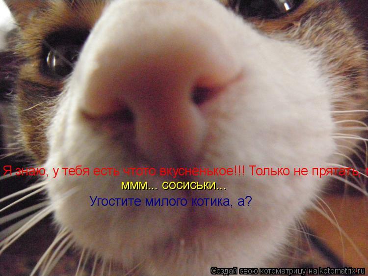 Котоматрица: Я знаю, у тебя есть чтото вкусненькое!!! Только не прятать, ммм... сосиськи...  ммм... сосиськи... Угостите милого котика, а?