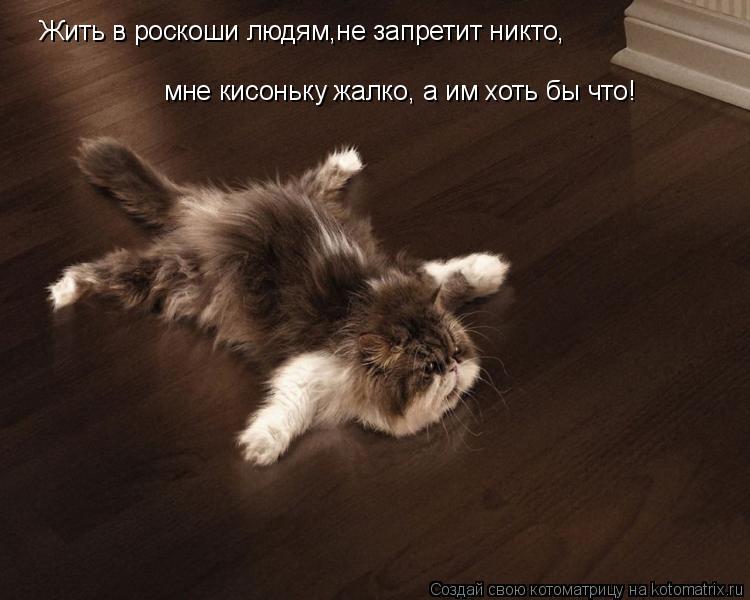 Котоматрица: Жить в роскоши людям,не запретит никто, мне кисоньку жалко, а им хоть бы что!