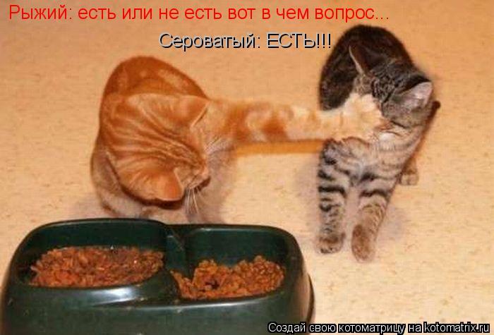 Котоматрица: Рыжий: есть или не есть вот в чем вопрос... Сероватый: ЕСТЬ!!!