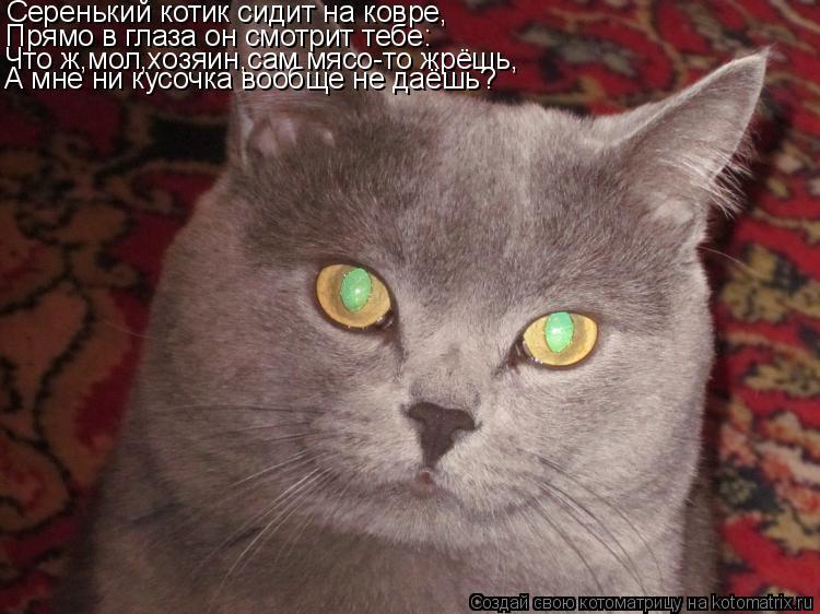 Котоматрица: Серенький котик сидит на ковре, Прямо в глаза он смотрит тебе: Что ж,мол,хозяин,сам мясо-то жрёшь, А мне ни кусочка вообще не даёшь?