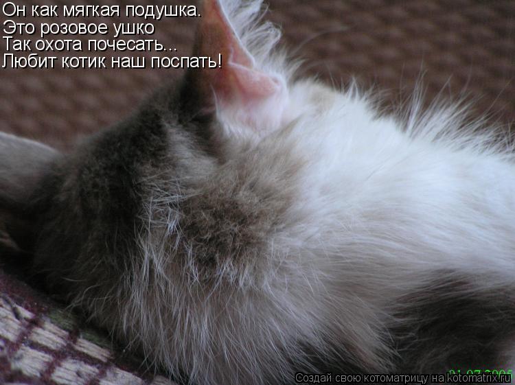 Котоматрица: Он как мягкая подушка. Это розовое ушко Так охота почесать... Любит котик наш поспать!