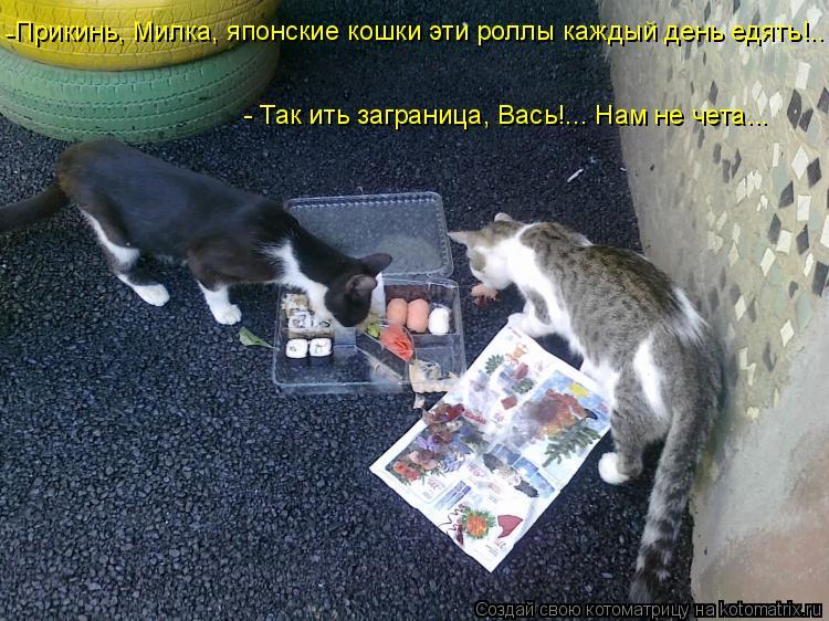 Котоматрица: Прикинь, Милка, японские кошки эти роллы каждый день едять!.. - - Так ить заграница, Вась!... Нам не чета...