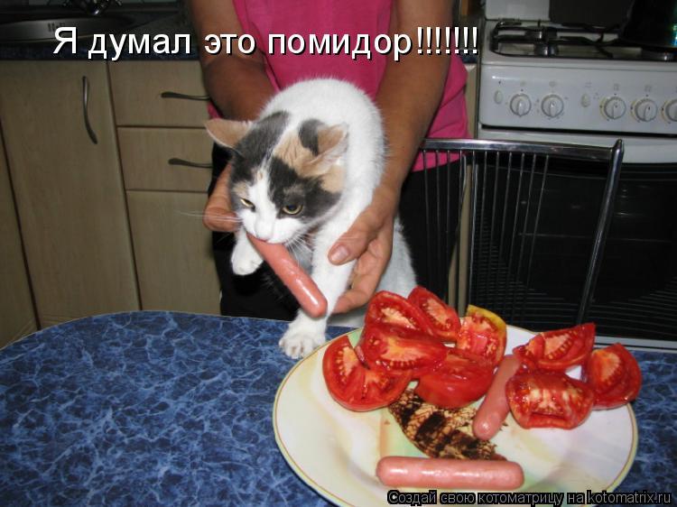 Котоматрица: Я думал это помидор!!!!!!!