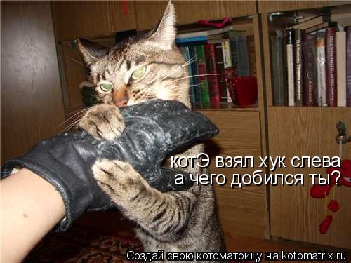 Котоматрица: котЭ взял хук слева а чего добился ты?