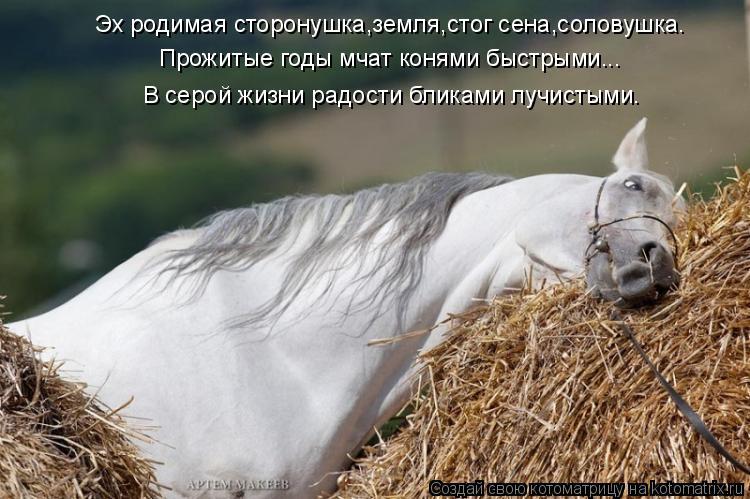 Котоматрица: Эх родимая сторонушка,земля,стог сена,соловушка. Прожитые годы мчат конями быстрыми... В серой жизни радости бликами лучистыми.
