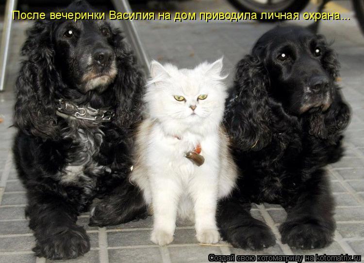 Котоматрица: После вечеринки Василия на дом приводила личная охрана...