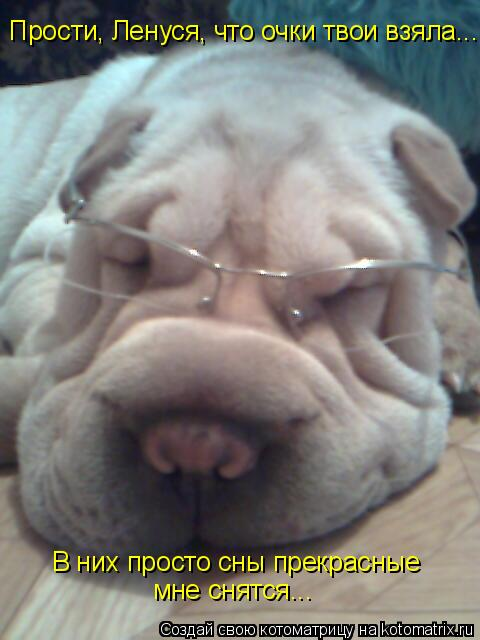 Котоматрица: Прости, Ленуся, что очки твои взяла... В них просто сны прекрасные мне снятся... В них просто сны прекрасные мне снятся...