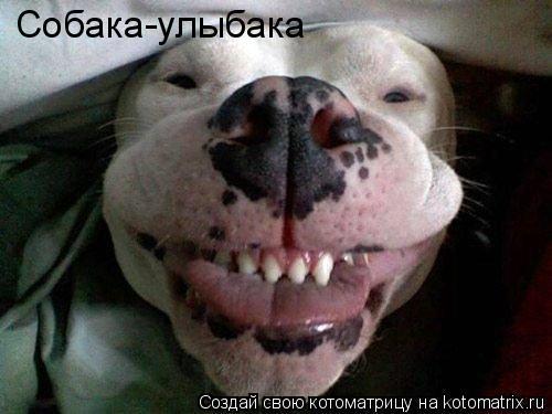 Котоматрица: Собака-улыбака