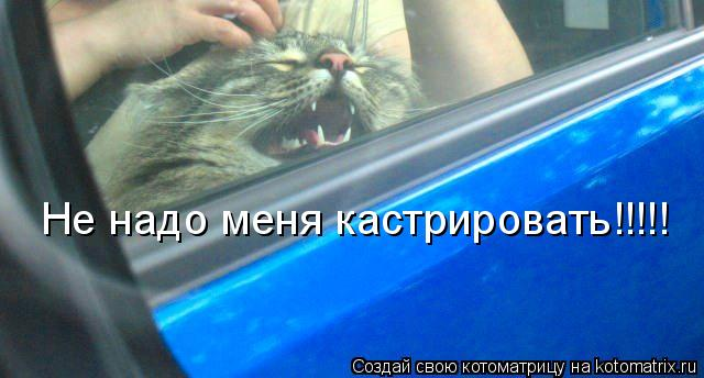 Котоматрица: Не надо меня кастрировать!!!!!