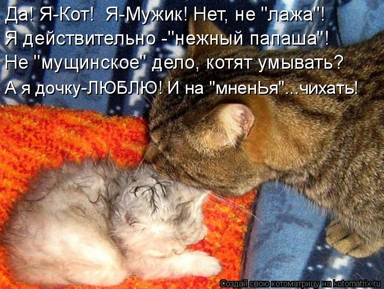 """Котоматрица - Да! Я-Кот!  Я-Мужик! Нет, не """"лажа""""! Я действительно -""""нежный папаша""""!"""