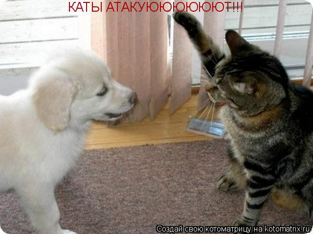 Котоматрица: КАТЫ АТАКУЮЮЮЮЮЮТ!!!