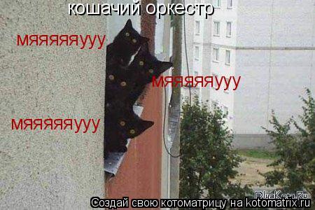 Котоматрица: кошачий оркестр мяяяяяууу мяяяяяууу мяяяяяууу