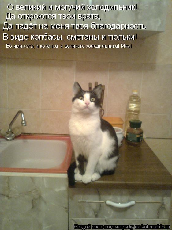 Котоматрица: О великий и могучий холодильник! Да откроются твои врата, Да падёт на меня твоя благодарность В виде колбасы, сметаны и тюльки! Во имя кота, и