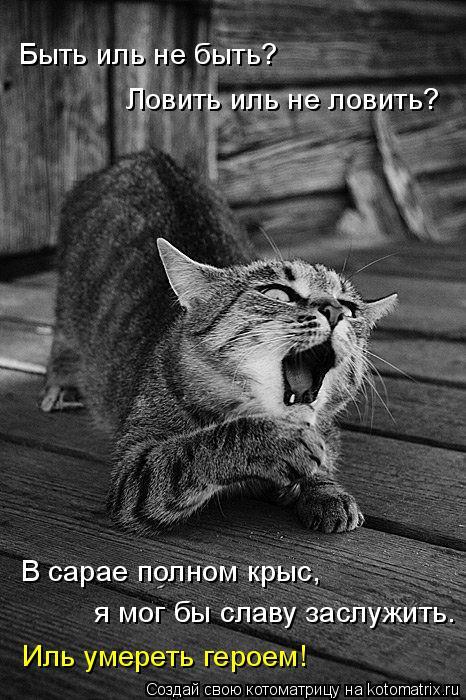 Котоматрица: я мог бы славу заслужить. В сарае полном крыс, Ловить иль не ловить? Быть иль не быть? Иль умереть героем!