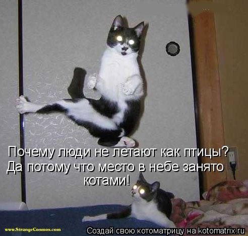 Котоматрица: Почему люди не летают как птицы? Да потому что место в небе занято котами!