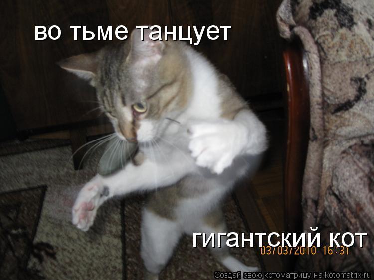 Котоматрица: во тьме танцует гигантский кот