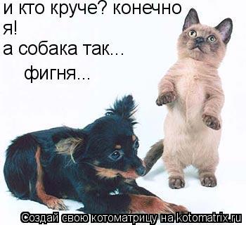 Котоматрица: и кто круче? конечно я! а собака так... фигня...