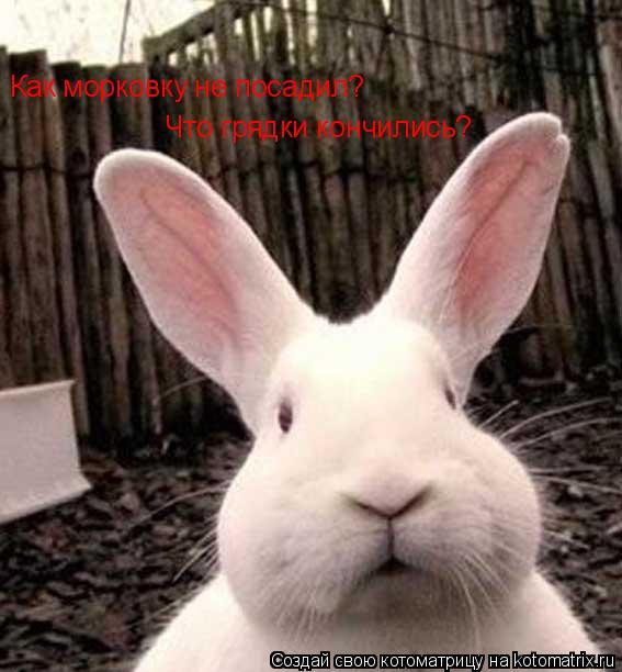 Котоматрица: Как морковку не посадил? Что грядки кончились?