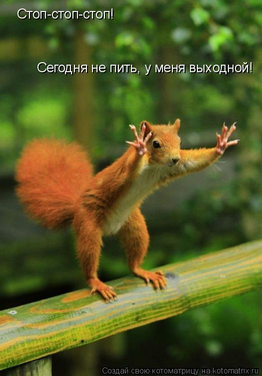Котоматрица: Стоп-стоп-стоп!  Сегодня не пить, у меня выходной!