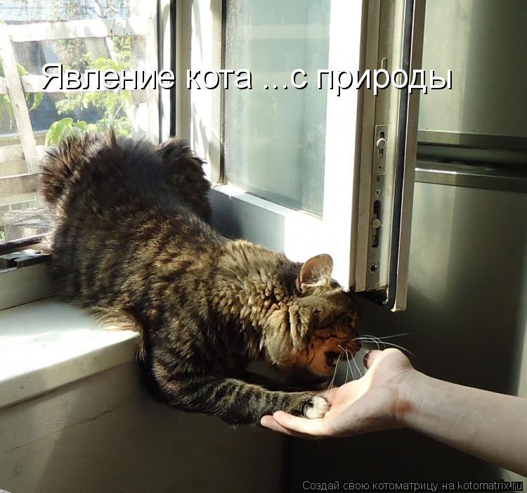 Котоматрица: Явление кота ...с природы
