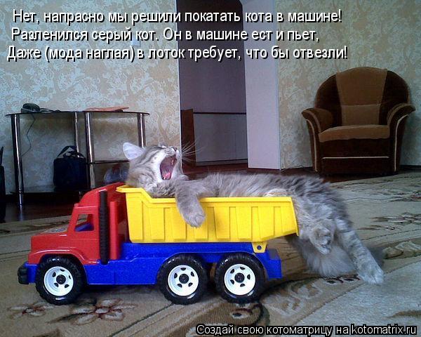 Котоматрица: Нет, напрасно мы решили покатать кота в машине! Разленился серый кот. Он в машине ест и пьет, Даже (мода наглая) в лоток требует, что бы отвезл