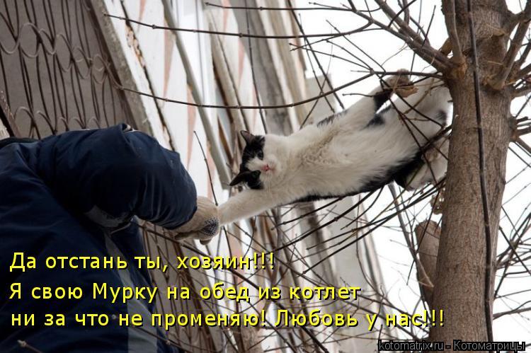 Котоматрица: Да отстань ты, хозяин!!! Я свою Мурку на обед из котлет ни за что не променяю! Любовь у нас!!!