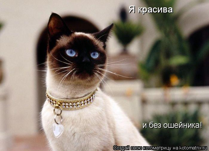Котоматрица: Я красива и без ошейника!