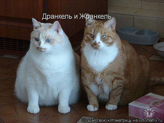 Котоматрица: Дранкель и Жранкель