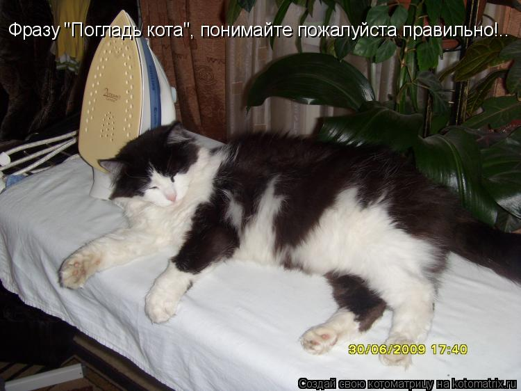 """Котоматрица: Фразу """"Погладь кота"""", понимайте пожалуйста правильно!.."""