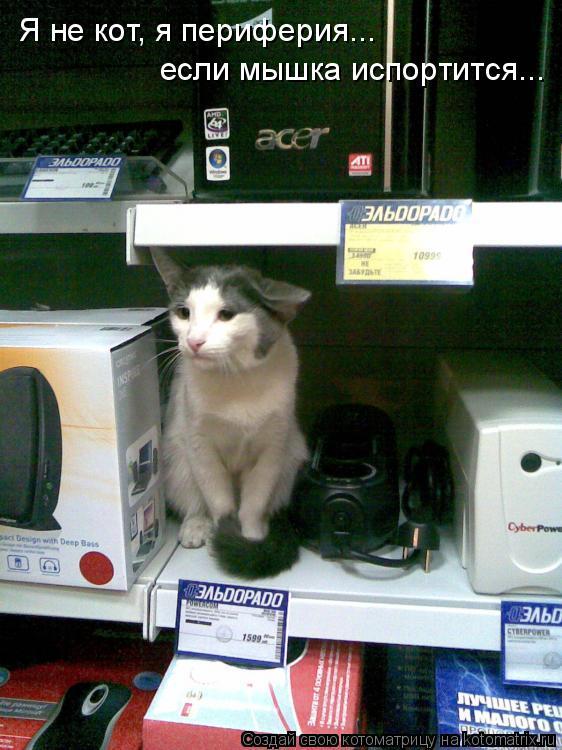 Котоматрица: Я не кот, я периферия... если мышка испортится...