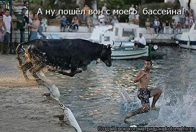 Котоматрица: А ну пошёл вон с моего  бассейна!