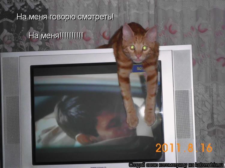 Котоматрица: На меня говорю смотреть!  На меня!!!!!!!!!!