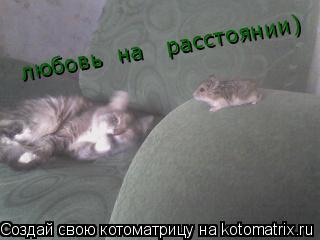 Котоматрица: любовь  на   расстоянии)