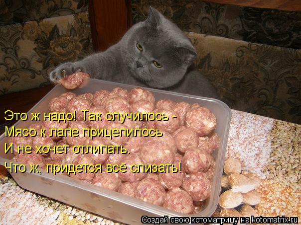 Котоматрица: Это ж надо! Так случилось - Мясо к лапе прицепилось  И не хочет отлипать.  Что ж, придется всё слизать!