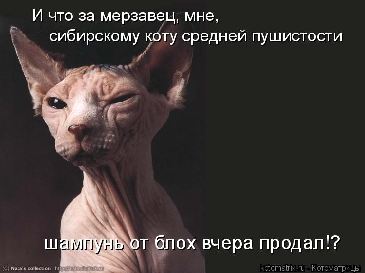 Котоматрица: И что за мерзавец, мне,  сибирскому коту средней пушистости шампунь от блох вчера продал!?
