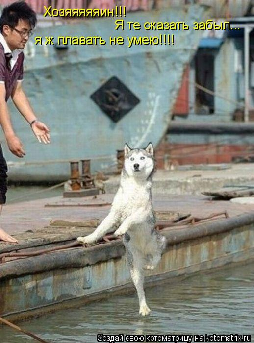 Котоматрица: Хозяяяяяин!!! Я те сказать забыл... я ж плавать не умею!!!!