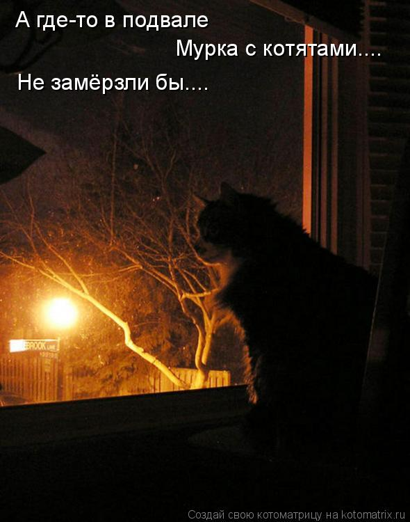 Котоматрица: А где-то в подвале Мурка с котятами.... Не замёрзли бы....